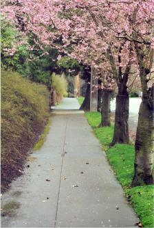 Park access street in early spring bloom
